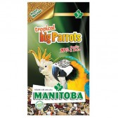 Mixtura loros big parrots