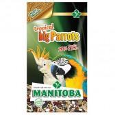 Mixtura loros big parrots